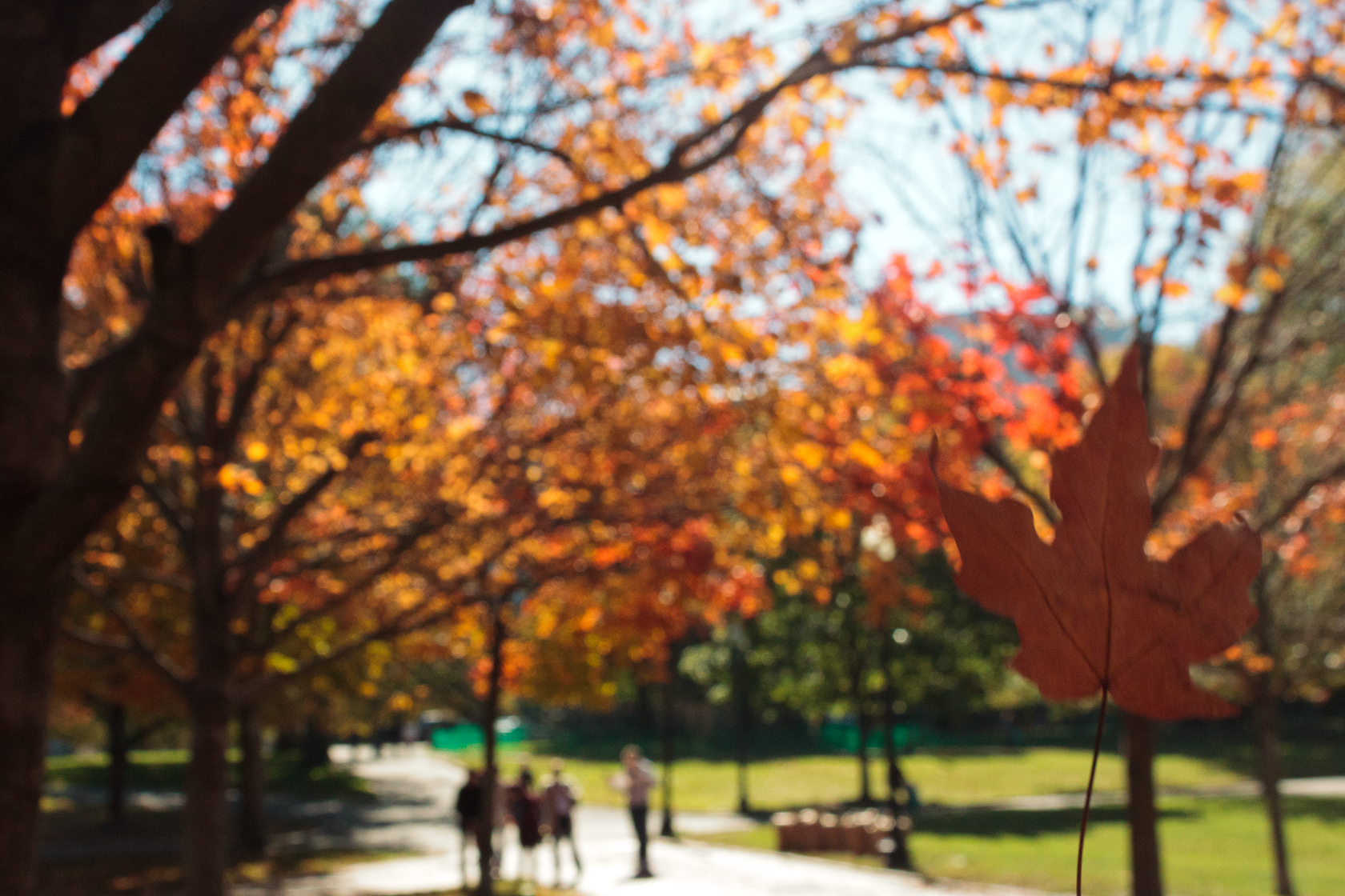 part 2] Leaf Peeping: Boston Public Gardens | Christina Minniti ...