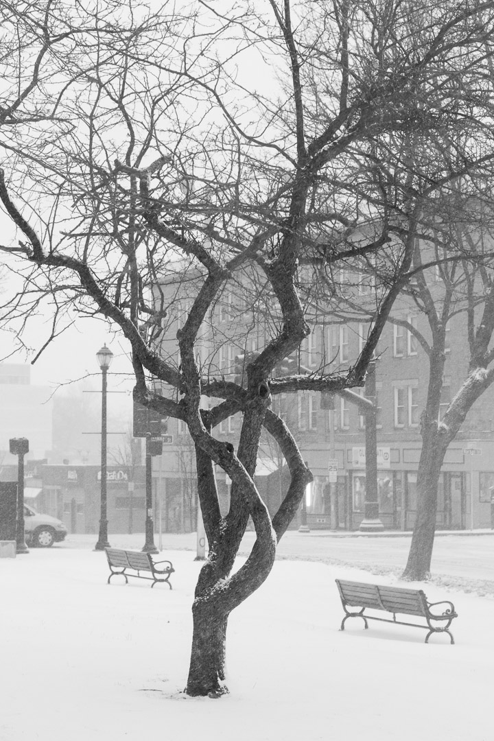 Winter Storm Nemo (2013) | Christina Minniti Photography